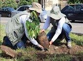 En Villanueva se celebrar� D�a del Medio Ambiente con siembra de �rboles