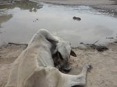Corporinoquia emiti� circular sobre fen�meno de El Ni�o en Paz de Ariporo