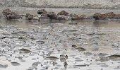 Durante Semana Ambiental Corporinoquia explicó las causas de la tragedia ecológica en Paz de Ariporo