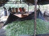 Neutralizado laboratorio para la producci�n de pasta  base de coca�na en  Vichada