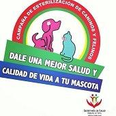 Jornada de esterilizaci�n de perros y gatos en Yopal