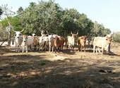 Polic�a recuper� 16 toros y 2 caballos hurtados
