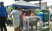 22 caninos y felinos esterilizados encontraran un hogar en Yopal