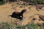 13 animales de diferentes especies fueron devueltos a su h�bitat en el hato La Aurora