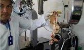 262 kilos de carne fueron decomisados en Man� por deficientes condiciones sanitarias