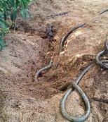 Ejército frustró hurto de crudo y halló caleta en Aguazul