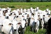 Seminario de fortalecimiento a la  cadena productiva del ganado de carne bovina