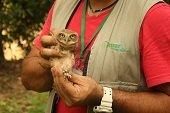 Corporinoquia liber� otros 31 animales en el Hato La Aurora