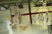 Autoridades eval�an hoy estado de la planta de beneficio animal de Yopal