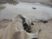 Critican gestión de la Gobernación para evitar nuevo desastre ambiental en Paz de Ariporo