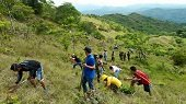Hoy siembra masiva de �rboles en Yopal, Monterrey y Paz de Ariporo