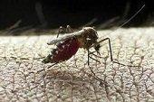 Casanare se acerca a los 2 mil casos de Zika este año