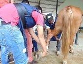 Ej�rcito Nacional capacit� a profesionales y estudiantes casanare�os de medicina veterinaria