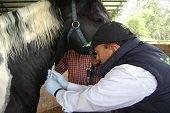 Cuarentena en Casanare por cuatro casos de Encefalitis equina del este