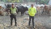 Proyecto de Ley busca aumentar las penas por abigeato y carneo en Colombia