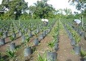 Problemas sociales por trabajadores que llegan a las palmeras al Sur de Casanare