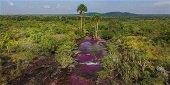 Investigaci�n sobre la flora de Ca�o Cristales socializo Cormacarena