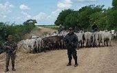 En Paz de Ariporo nuevo resultado contra el delito del abigeato
