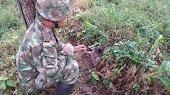 Ej�rcito neutraliz� acciones terroristas del ELN en Saravena, Arauquita y Fortul