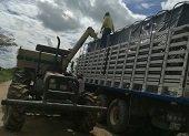 En Casanare hay trabajo para camiones que trasporten la cosecha arrocera