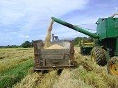 Escenarios deportivos de Yopal serán utilizados como bodegas para almacenar arroz