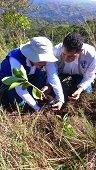 En nombre de la paz fueron sembrados 1.100 nuevos árboles en el cerro el venado de Yopal