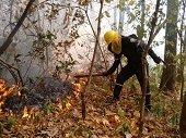 80 hectáreas del cerro El Venado arrasadas por incendio
