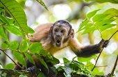 Advertencias para evitar enfermedades causadas por animales silvestres hacen autoridades ambientales