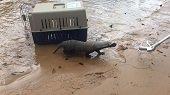 Cormacarena libera especies animales rescatadas del tráfico ilegal