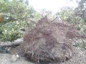 Tormenta en Sabanalarga causó múltiples afectaciones