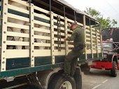 Aprobado en primer debate proyecto de ley contra el abigeato y carneo en Colombia