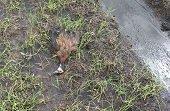 Arrocero en San Luís de Palenque causó mortandad de patos silvestres