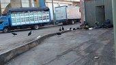 Caos en alrededores de la Central de abastos de Yopal por pésima disposición de basuras