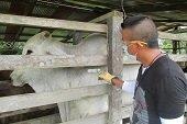Se descarta notificación de casos de fiebre aftosa en Casanare