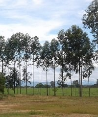 Covioriente deberá restaurar ecológicamente 228.32 hectáreas en la vía Villavicencio –Yopal