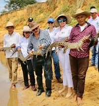 Más caimanes criados en Orocué fueron liberados en Cravo Norte Arauca