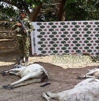 Delincuentes que pretendían hurtar ganado dispararon contra efectivos del Ejército