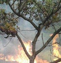 Arde el cerro El Venado de Yopal