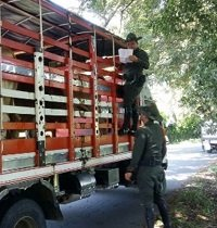 Policía recuperó 28 cabezas de ganado que habían sido hurtados en Paz de Ariporo