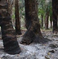Urbanizadores ilegales cometen nuevo crimen ambiental en Yopal