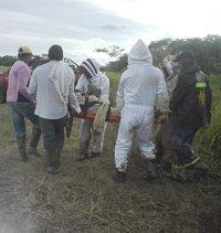 En estado crítico hombre atacado por abejas en Nunchía