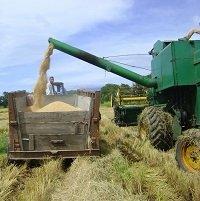 MinAgricultura socializa hoy en Yopal el Plan de Ordenamiento de la producción de arroz