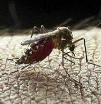 Este año van 320 casos de dengue en Casanare