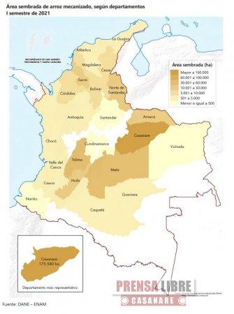 Casanare el departamento con mayor número de hectáreas sembradas de arroz - Noticias de Colombia
