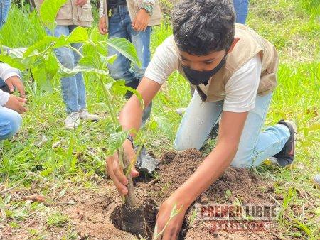 Más de 37 mil árboles sembrará Cormacarena en octubre en el Meta - Noticias de Colombia